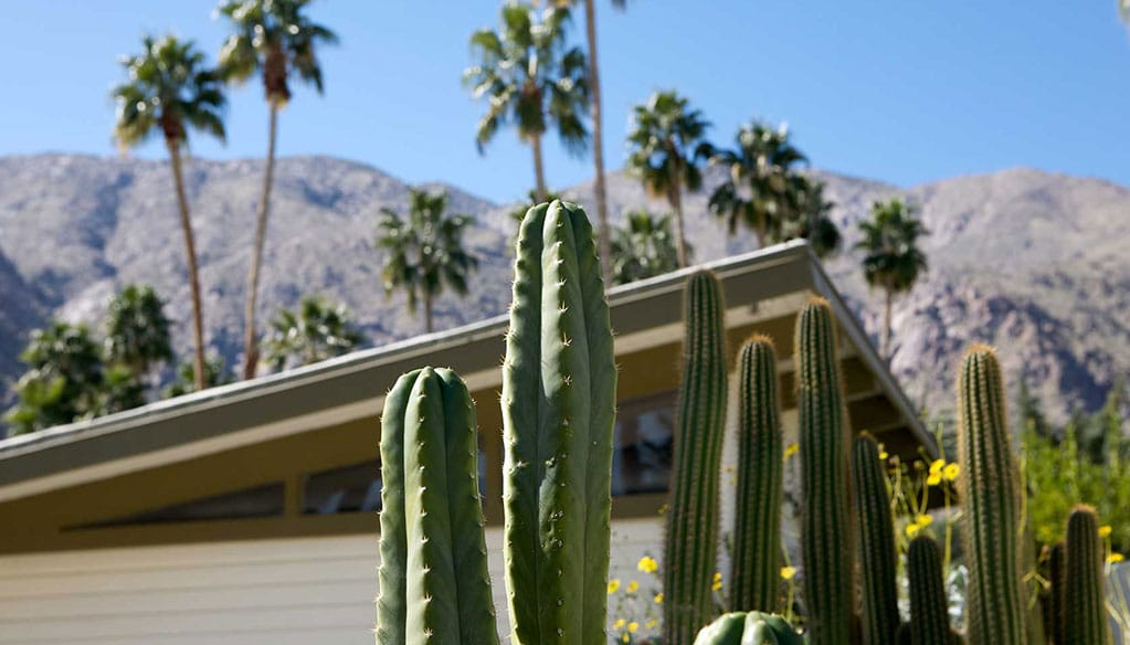 cactus in front of midcentury building